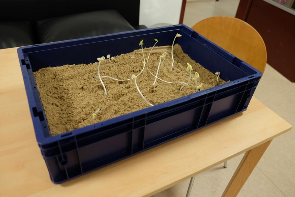 Aus dem Sand wachsen frische Keime